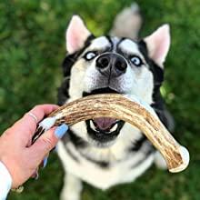 Dog Antler Chews