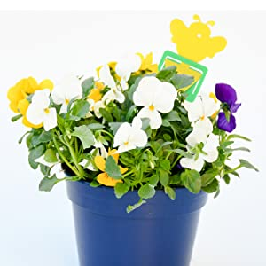 systemic for houseplants yellow sticky traps sticky paper for bugs venus fly trap plant