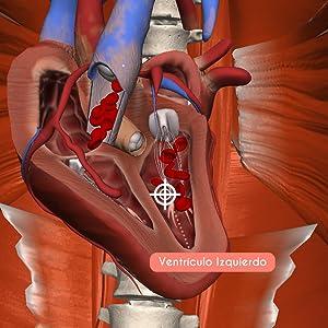 corazón, anatomía, cuerpo humano,educación