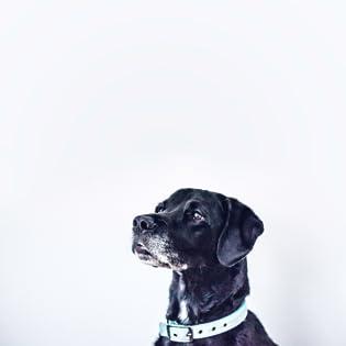 dog,pet,dog treats,dog chews,dental sticks express pet supplies