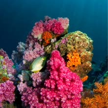 Marine biological research and marine environmental protection