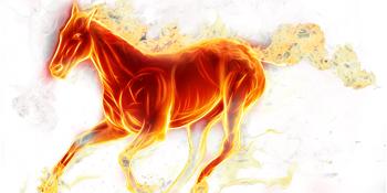 Horse Dildo