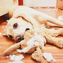 dog interactive toys for boredom