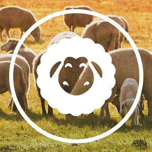 3 Pairs Mens Extra Long Knee High Argyle Lambs Wool Dress Socks in Brown or Grey