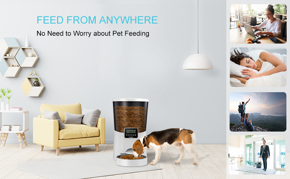 pet feeder for dogs