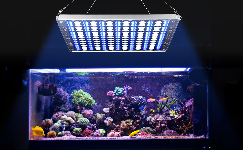 TOPLANET 75W LED Grow Light with Switch Built-in transformer Grow Bulb Aquarium Light Blue//White for Indoor Greenhouse Hydroponic Grow Box Plants Germination Vegetative /& Fish Tank Decoration