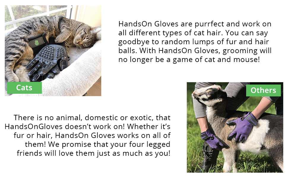 Cats & Other furry friends