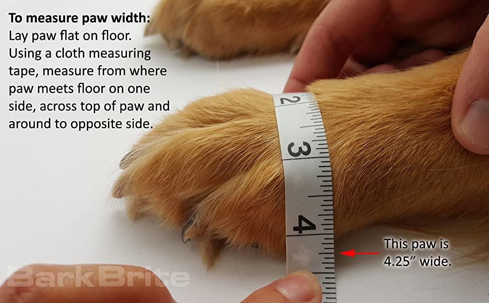 How to Measure your pup's paw