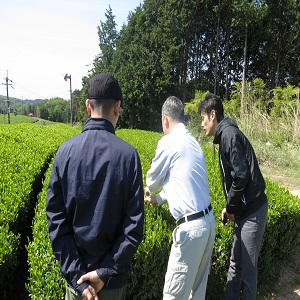 green tea Japan Sencha Roasted green Tea Hojicha Twig Loose Leaf Weight loss Beauty Health Catechin