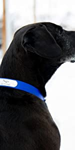 dogIDS Personalized Waterproof Soft Grip Dog Collar - Adjustable, Odor Resistant, Rivet on Nameplate