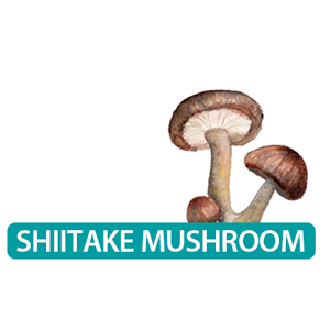 shitake supplement