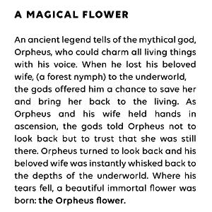 ORPHEUS FLOWER LEGEND