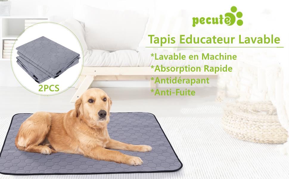 tapis apprentissage propreté chien