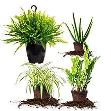 Perfect Plants Nursery liquid indoor house plant food fertilizer fast growing office plant