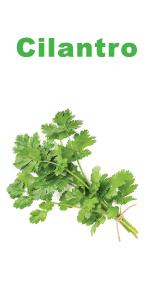 Fresh organic cilantro seeds - coriander seed starter kit by Nature's blossom garden kits