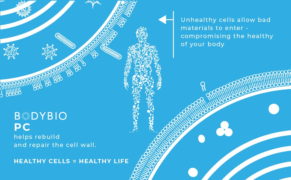 bodybio pc helps rebuild repair cell wall protects cell membrane healthy cells healthy life