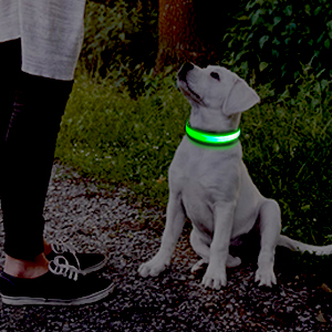 collier led chien rechargeable