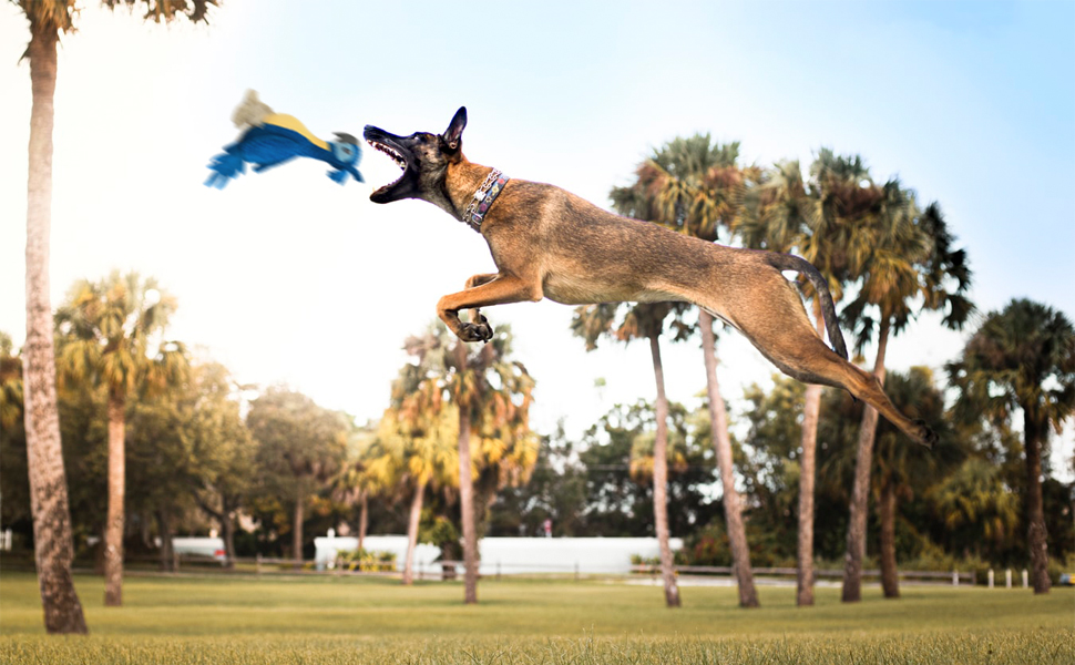 Exercise Dog's Leaping Ability