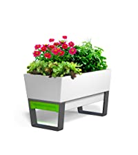 Urban garden, glowpear, self watering, self watering planter, planter, white planter, kitchen garden