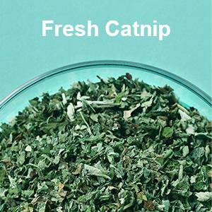 Fresh Catnip