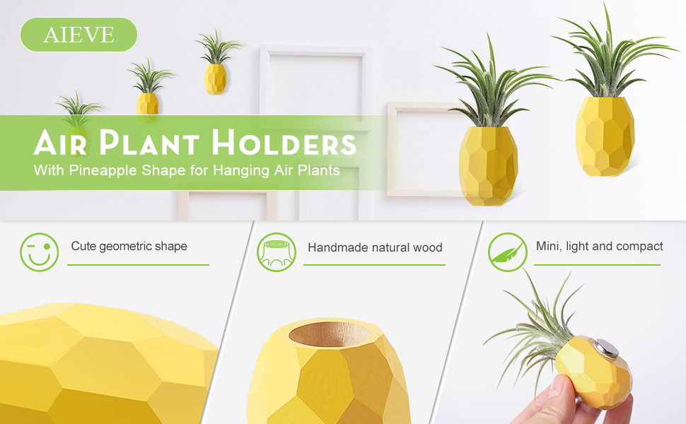 air plant holder
