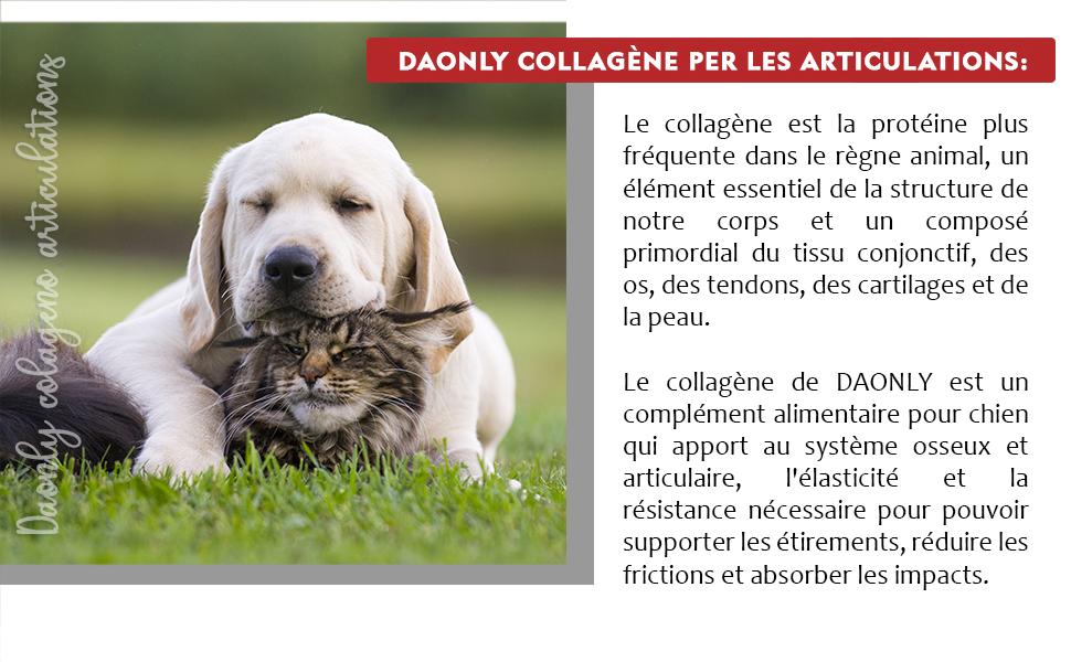anti arthrose vermifuge chien comprimé vermifuge chat comprimeglucosamine chondroitine joint care