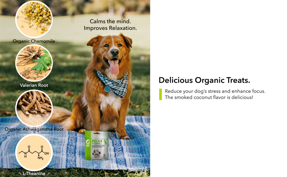 dog treats with melatonin hyper dog  dog treat with all the right ingredients for your dog's health