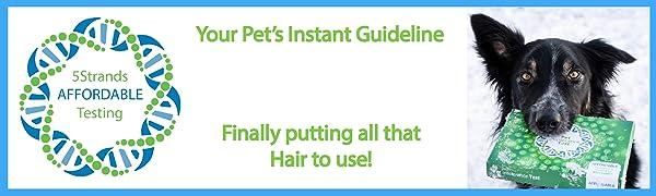5Strands, Affordable Testing, Intolerance, Allergy, Food, Nutrition, Health, Dog, Cat, Pet
