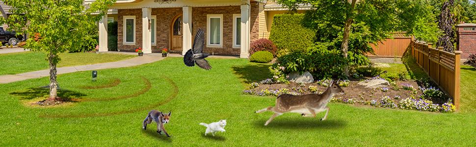 deer repellents bear deterrent repellent bat repellant animal repeller ultrasonic bird fox cat yard