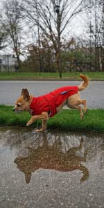 DJANGO City Slicker All-Weather Dog Jacket and Water-Repellent Dog Raincoat with Reflective Piping