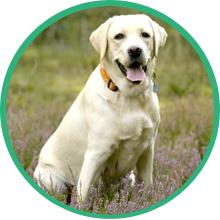 turmeric hip and joint supplement msm chondroitin glucosomine adult dog senior msm hemp chew large
