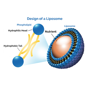 Liposomal ingredient nutrient design