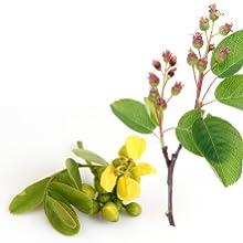 bowel movement supplement