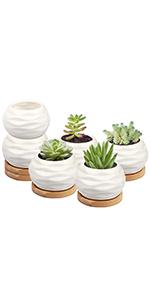 water pattern planter