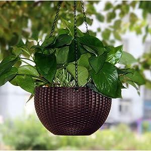plant-4