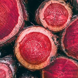 Red Cedar Heartwood Houndsbay Shoe Tree Form Shaper