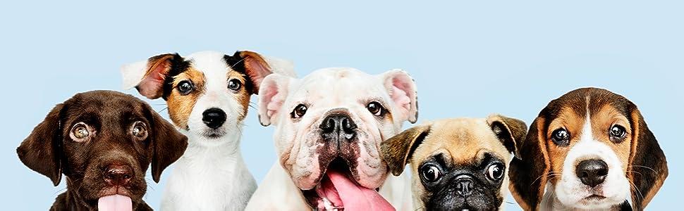 dog bed, cat bed, dog house, dog hut, large bed for dogs, bed for large dogs, xxl dog bed