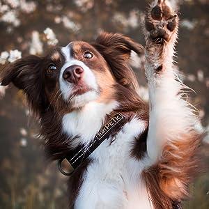 Funpetic Hundeleine Elastisch Anbinden Moglich Zwei Griffe Reflektierend Fur Grosse Und Mittelgrosse Hunde Amazon De Haustier