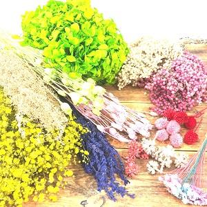 ニチフロ プリザ 花材