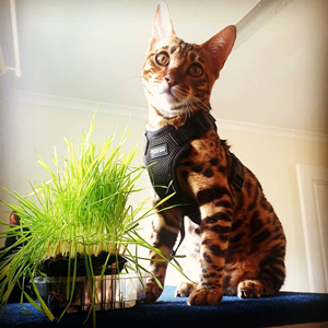 cat harness and leash set small cats vest harnesses with leash small pets walking harness adjustable