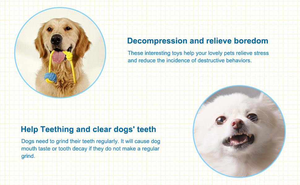 Help clean dog's teeth