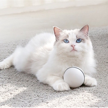 another cat holding ball