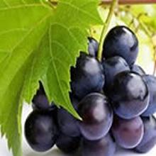 Purple grape, natural ingredients, food color, natural food color, synthetic free food color