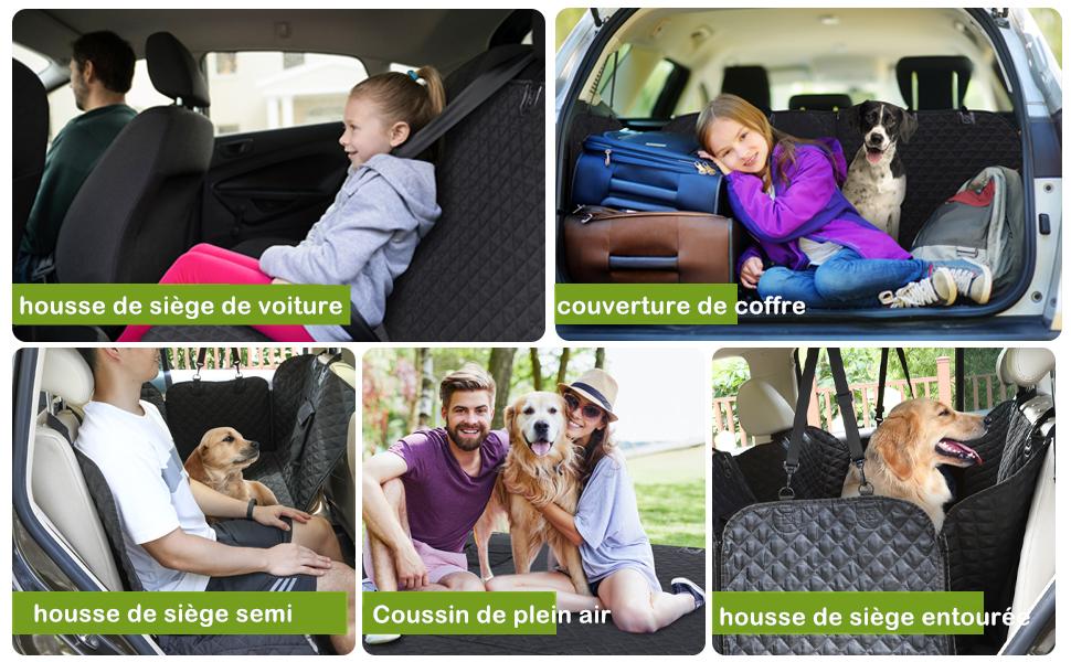 house voiture chien