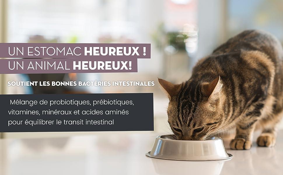 Digestease pour chats