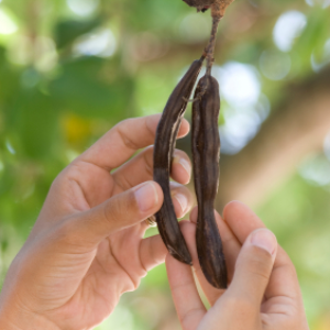 Pinitol in carob pods reduces insulin resistance and boosts energy. Carob supports good digestion