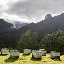 bee hives for happy valley honey