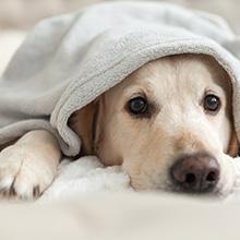 Hundesofa mit Weichem Bezug Rundes Hundebett Haustiersofa mit Holzbeinen