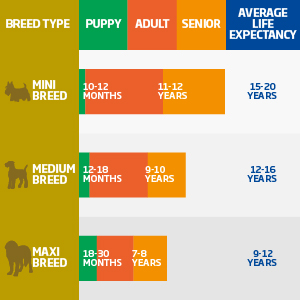 Breed Life expectancy