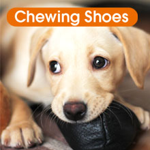 2 chew toy - chewing shoes